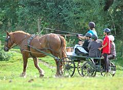 emploi equitation bafd gisors